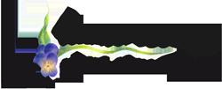 Andre-van-Rooij-logo-2015-250px